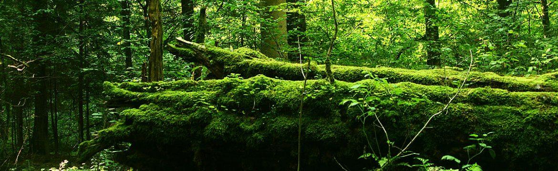 survie en nature